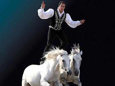 Salons salon cheval passion du 19 au 23 janvier for Salon du cheval a avignon