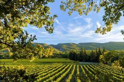 Salon des Vins et produits du terroir à APT