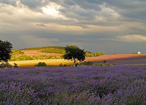 Locations de vacances, gîtes, chambres d'hôtes, hôtels en Luberon & Provence. Direct propriétaires