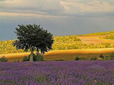 Locations de vacances disponibles en Luberon Provence !