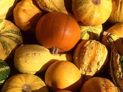 Foire à la Coucourde dimanche 2 octobre à Lauris