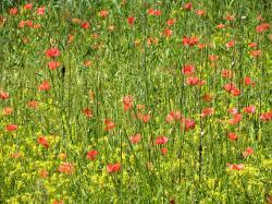 Le printemps des Salades du 22 au 27 avril à Ménerbes